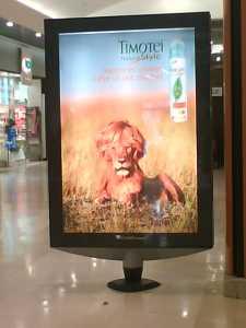 帰って来たライオン!