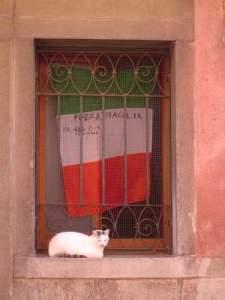 ヴェネツィアの猫1