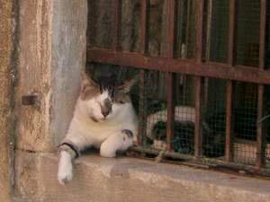 ヴェネツィアの猫5