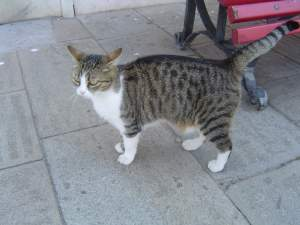 ヴェネツィアの猫6
